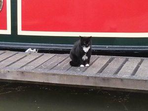 boat cat, narrowboat, marina, welford,