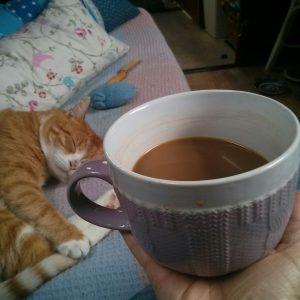 boat cat, coffee, caffeine,