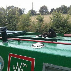 braunston, boat cat, barney boat, narrowboat,
